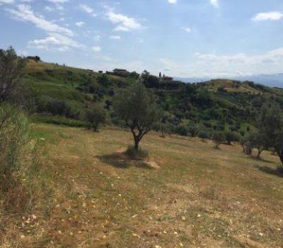 Terreno Agricolo, località Parantoro