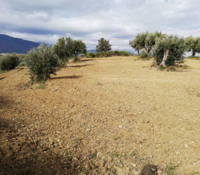 Terreno Agricolo – San Vincenzo la Costa