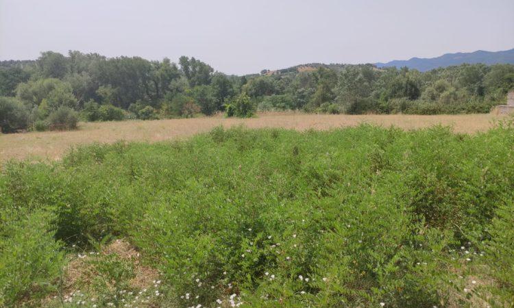 Terreno Edificabile ed Agricolo – Montalto Uffugo